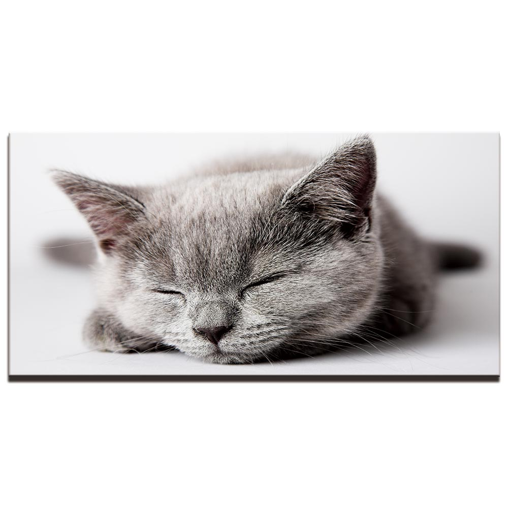 Tableau chaton qui dort