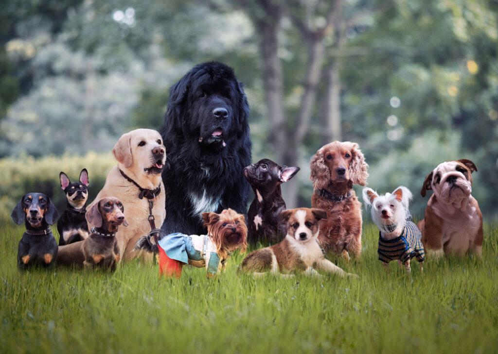 Les différentes races de chien