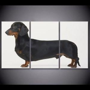 Tableau chien Teckel