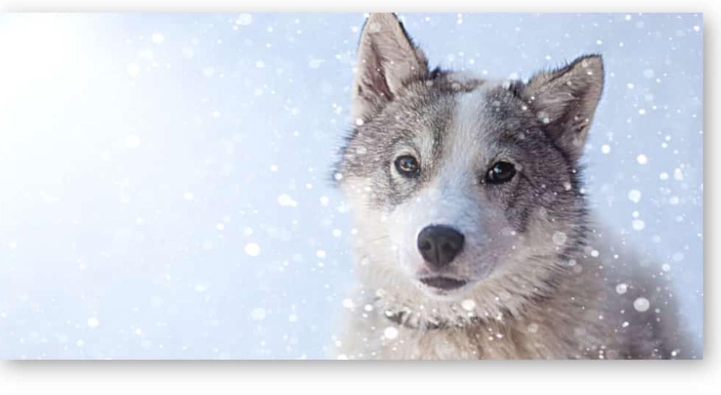 Tableau petit loup dans la neige